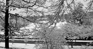 Snowy Highland Park B&W