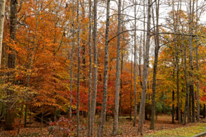 Autumn 2013 71+