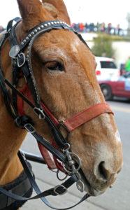 New Orleans Mule+