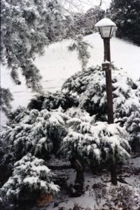 Snow 1982 4 C-135001